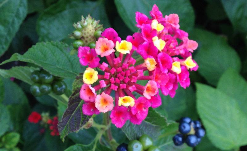 """""""Ode a uma flor"""" e a beleza da ciência"""