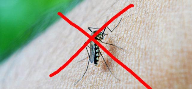 Proteja-se dos indesejáveis insetos com repelentes naturais neste verão: 6 dicas poderosas!